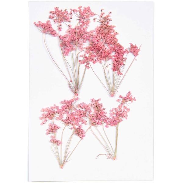 Fleurs pressées - Ammi branche rose - 4,5 x 6 cm - 4 pcs - Photo n°3