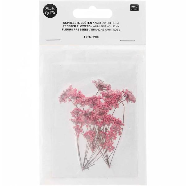 Fleurs pressées - Ammi branche rose - 4,5 x 6 cm - 4 pcs - Photo n°1