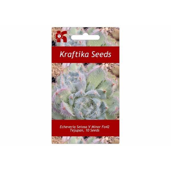 10 Graines Echeveria Setosa V Minor Fo42 Tejupan, Succulentes Mignonnes, Exotiques Rares Plantes à F - Photo n°1